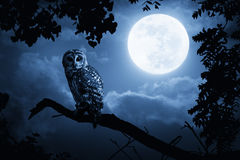 满月专心地照亮的猫头鹰手表在万圣夜夜上 免版税库存图片