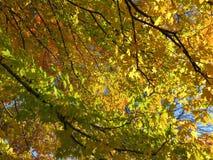 11月中旬桔子和黄色秋叶 免版税库存照片