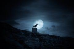 满月乌鸦 免版税库存图片