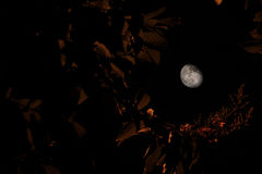 月亮…在一个多云晚上 免版税图库摄影