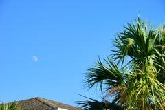 月亮和棕榈树 免版税库存图片