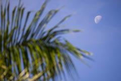 月亮和植被 库存照片