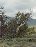 月亮国家公园的火山口 库存照片