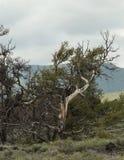 月亮国家公园的火山口 免版税库存照片