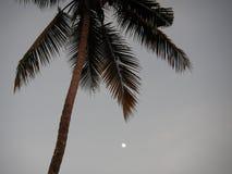 月亮在棕榈树下 免版税库存图片