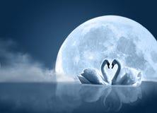 月亮天鹅 免版税图库摄影
