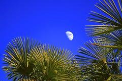 月亮掌上型计算机天空结构树 免版税图库摄影
