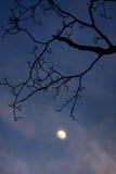 月亮现出轮廓的结构树 库存照片