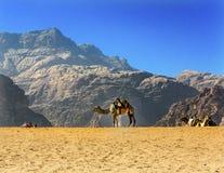 月亮瓦地伦约旦黄沙骆驼谷  库存图片