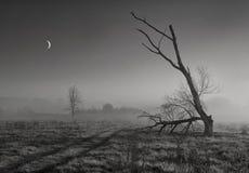 月亮祷告 免版税库存图片