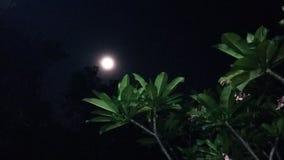 月亮秀丽  库存图片