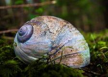 月亮蜗牛壳 免版税库存图片