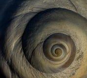 月亮蜗牛贝壳 免版税库存图片