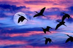 月亮覆盖天空鸟剪影 免版税库存图片
