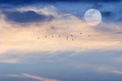 月亮覆盖天空鸟 免版税库存图片
