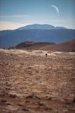月亮谷在阿塔卡马 免版税库存照片