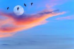 月亮鸟剪影 免版税库存图片