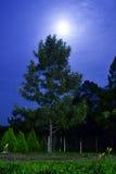 月光点燃的树 免版税库存照片
