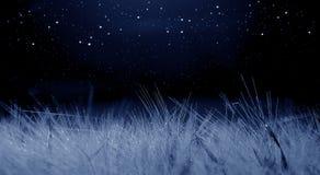 月光照亮的麦田蓝色,与星的黑暗的背景 免版税库存图片