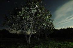 月光结构树 库存图片