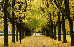 10月公园 免版税库存照片