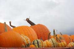 10月南瓜和南瓜万圣夜或感恩好灰色多云天空的 库存图片
