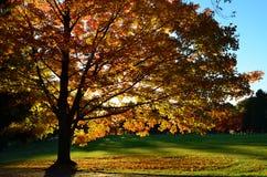 10月发光的树  库存照片