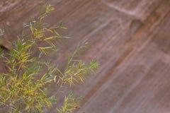 10月叶子和Paria的北部面孔指向, Kolob,锡安国家公园,犹他的手指峡谷 免版税库存照片