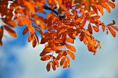 10月叶子的明亮的颜色 图库摄影