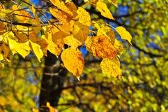 10月叶子的明亮的颜色 免版税图库摄影