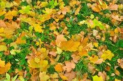 10月叶子的明亮的颜色 免版税库存图片