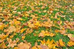 10月叶子的明亮的颜色 库存图片