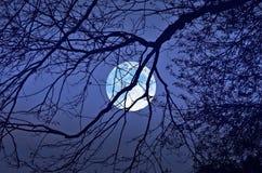 满月和黑分支在女睡衣 免版税图库摄影