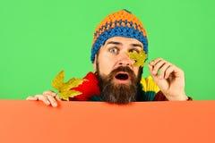 10月和11月时间想法 人拿着槭树叶子 免版税图库摄影