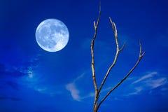 满月和结构树 免版税库存照片