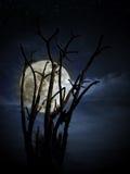 满月和结构树 免版税库存图片