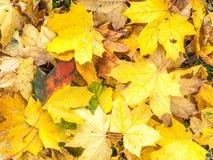 10月在公园把放置在地面上留在 免版税库存图片