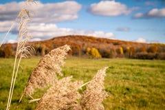 10月在加拿大 免版税图库摄影
