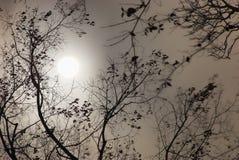 满月在晚上 库存图片