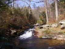 10月在森林里 免版税库存图片