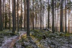 10月在森林里 免版税图库摄影