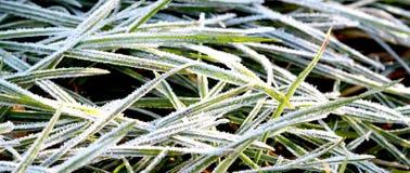 11月在的早晨霜植物 免版税库存图片
