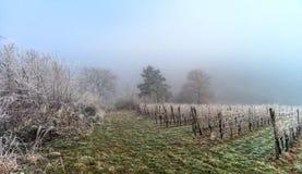 12月在葡萄园里 霜包括的不可思议的结冰的分支 免版税库存照片