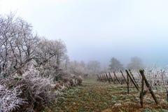 12月在葡萄园里 霜包括的不可思议的结冰的分支 库存照片