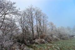12月在葡萄园里 霜包括的不可思议的结冰的分支 免版税库存图片