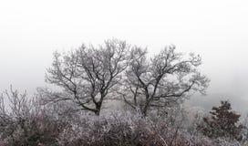 12月在葡萄园里 霜包括的不可思议的结冰的分支 免版税图库摄影