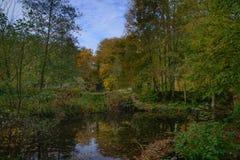 10月在Sonian森林里 免版税库存照片