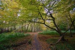 10月在Sonian森林里 库存图片
