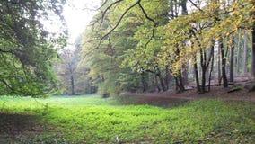 10月在Sonian森林里 免版税库存图片