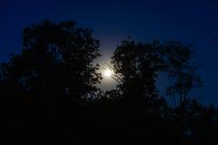 满月夜 库存照片